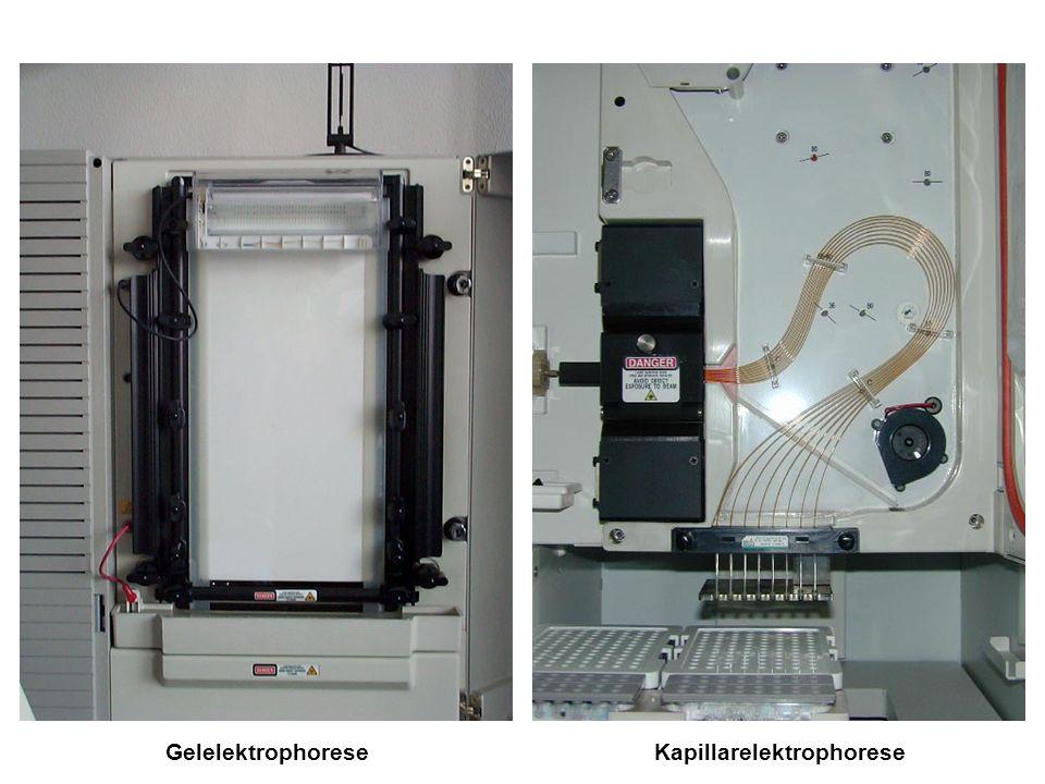 GelelektrophoreseKapillarelektrophorese
