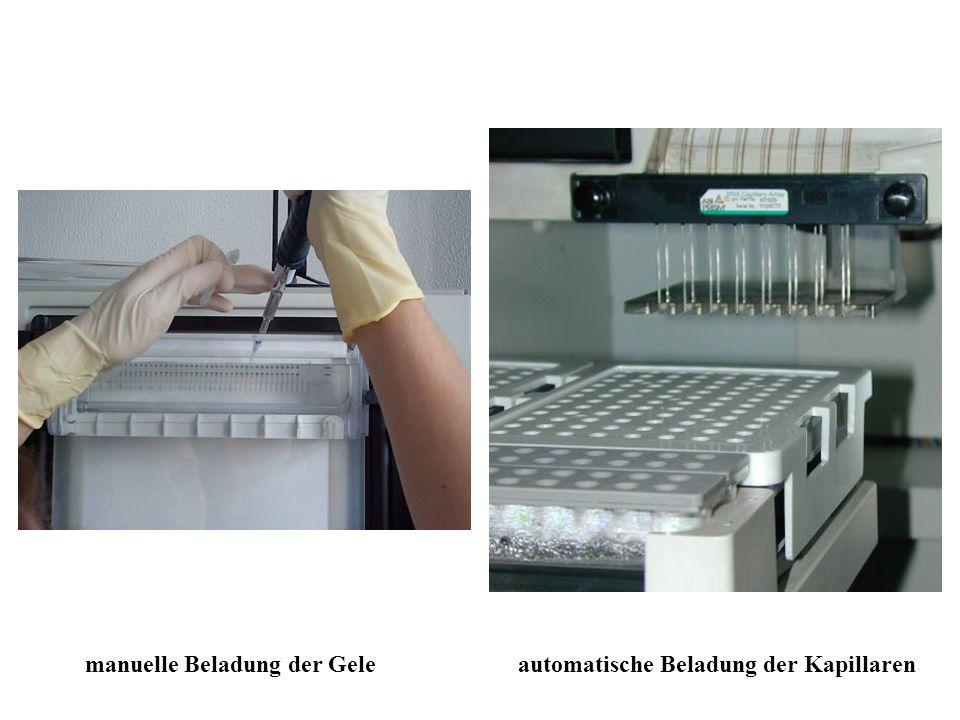 manuelle Beladung der Geleautomatische Beladung der Kapillaren