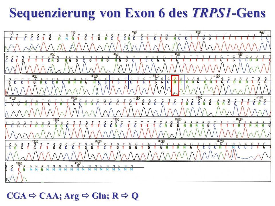 Sequenzierung von Exon 6 des TRPS1-Gens CGA  CAA; Arg  Gln; R  Q