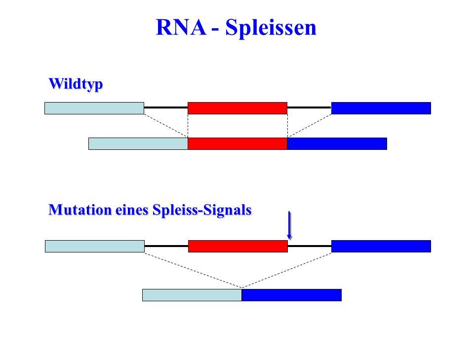 RNA - SpleissenWildtyp Mutation eines Spleiss-Signals