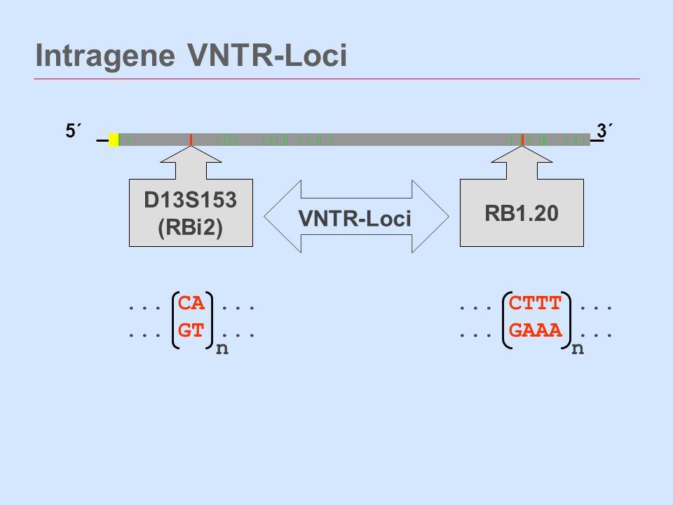 ... CTTT...... GAAA... Intragene VNTR-Loci 5´3´ D13S153 (RBi2) RB1.20... CA...... GT... nn VNTR-Loci