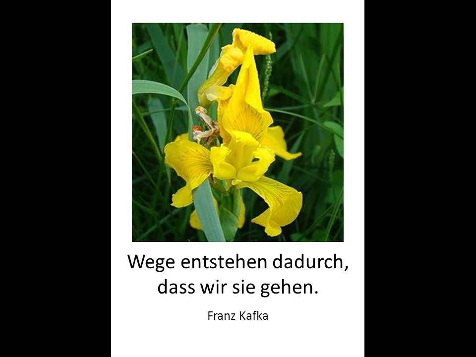 Wege entstehen dadurch, dass wir sie gehen. Franz Kafka