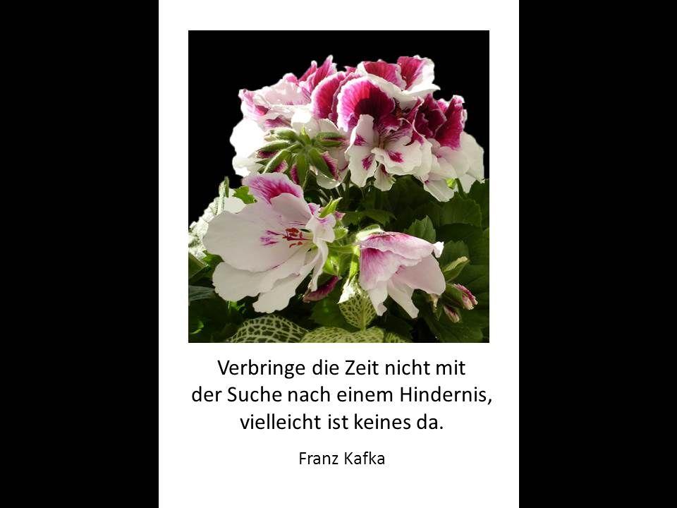 Verbringe die Zeit nicht mit der Suche nach einem Hindernis, vielleicht ist keines da. Franz Kafka