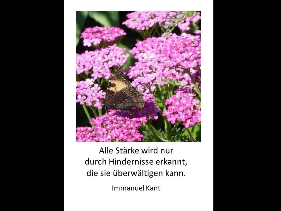 Alle Stärke wird nur durch Hindernisse erkannt, die sie überwältigen kann. Immanuel Kant