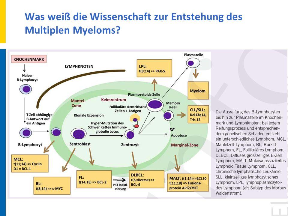 Was weiß die Wissenschaft zur Entstehung des Multiplen Myeloms?