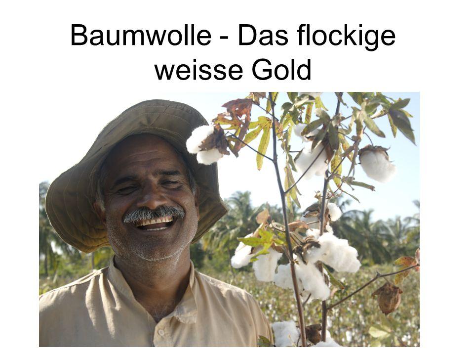 Baumwolle - Das flockige weisse Gold