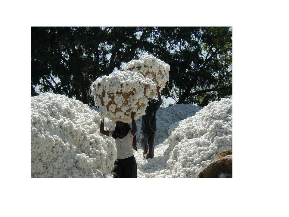 Geschichte chinesische Kaiser Ou-ti vor etwa 1300 Jahren bei seiner Krönung Gewand aus einem völlig neuen Material – Baumwolle.