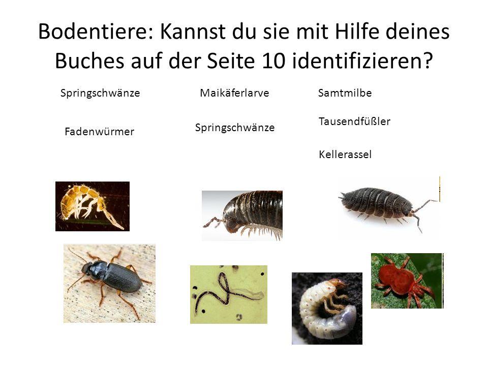 Bodentiere: Kannst du sie mit Hilfe deines Buches auf der Seite 10 identifizieren? Springschwänze Fadenwürmer Maikäferlarve Springschwänze Samtmilbe T