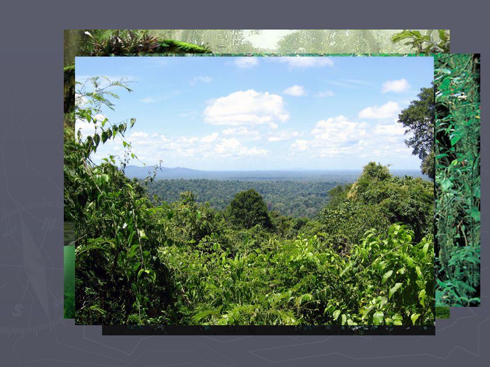 WWF ►D►D►D►Der Regenwald ist in Gefahr.