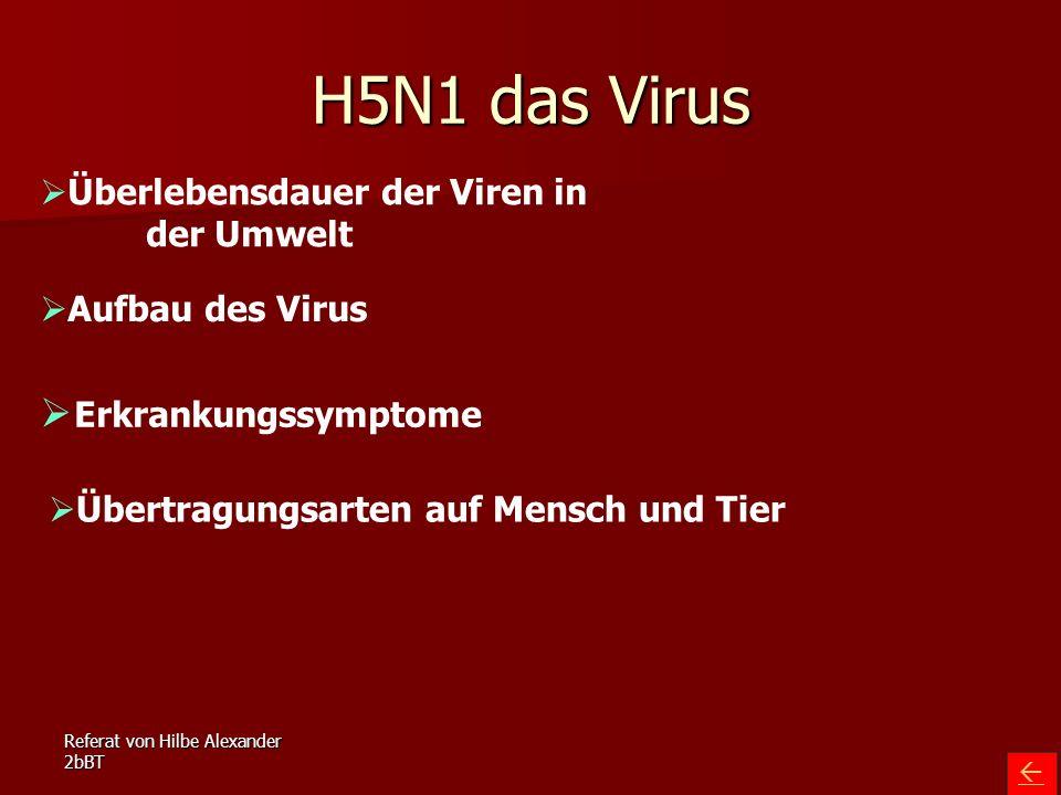 Referat von Hilbe Alexander 2bBT H5N1 das Virus   Überlebensdauer der Viren in der Umwelt Überlebensdauer der Viren in der Umwelt  Aufbau des Virus