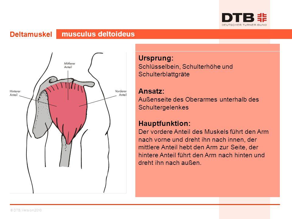 © DTB, Version 2010 Deltamuskel musculus deltoideus Ursprung: Schlüsselbein, Schulterhöhe und Schulterblattgräte Ansatz: Außenseite des Oberarmes unte