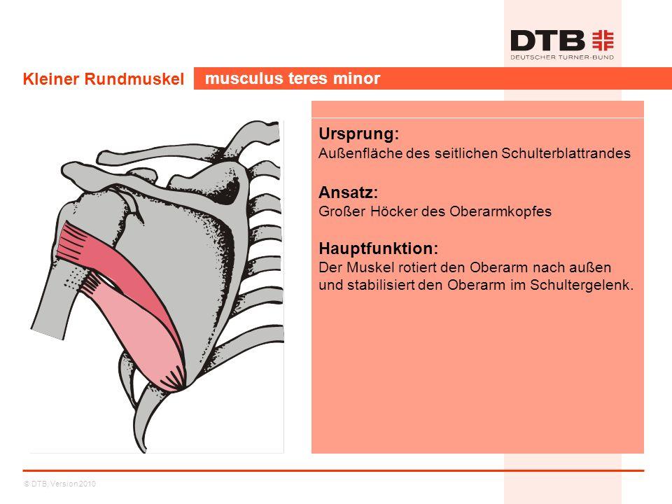 © DTB, Version 2010 Kleiner Rundmuskel musculus teres minor Ursprung: Außenfläche des seitlichen Schulterblattrandes Ansatz: Großer Höcker des Oberarm