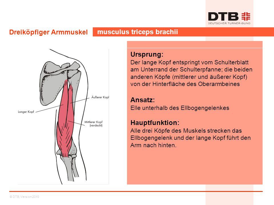 © DTB, Version 2010 Dreiköpfiger Armmuskel musculus triceps brachii Ursprung: Der lange Kopf entspringt vom Schulterblatt am Unterrand der Schulterpfa