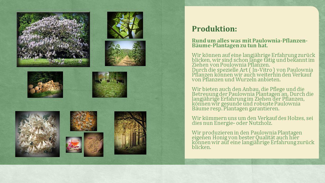 Rund um alles was mit Paulownia-Pflanzen- Bäume-Plantagen zu tun hat.