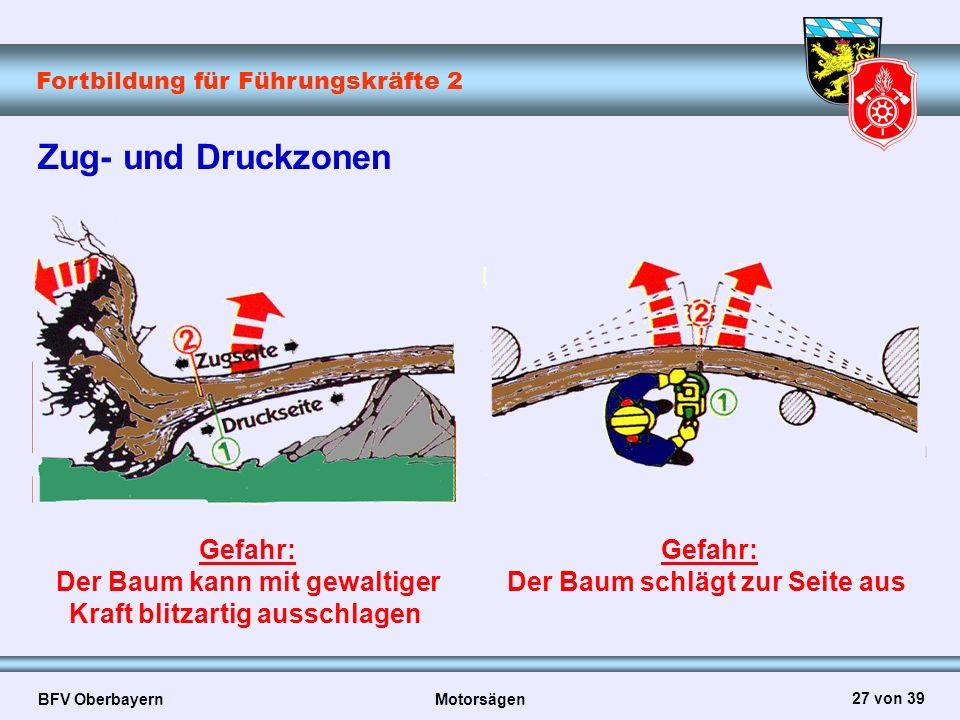 Fortbildung für Führungskräfte 2 BFV Oberbayern Motorsägen 27 von 39 Zug- und Druckzonen Gefahr: Der Baum kann mit gewaltiger Kraft blitzartig ausschl