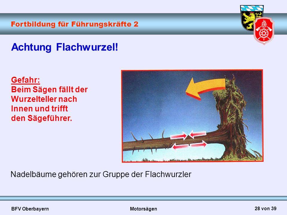 Fortbildung für Führungskräfte 2 BFV Oberbayern Motorsägen 28 von 39 Achtung Flachwurzel! Gefahr: Beim Sägen fällt der Wurzelteller nach Innen und tri