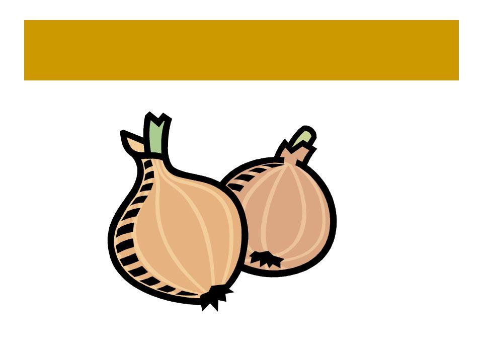Die Zwiebel- Die Zweibeln