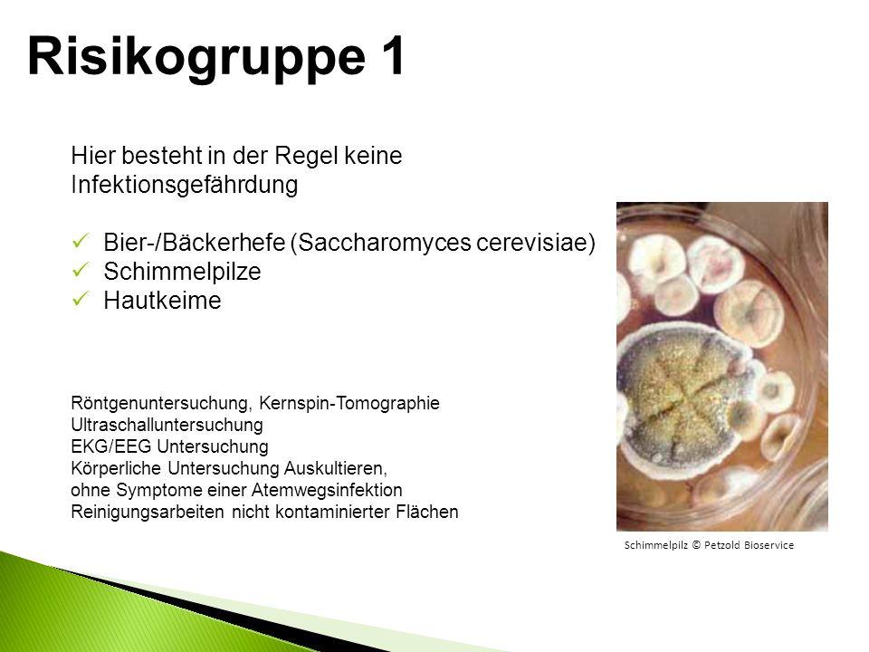 Hier besteht in der Regel keine Infektionsgefährdung Bier-/Bäckerhefe (Saccharomyces cerevisiae) Schimmelpilze Hautkeime Röntgenuntersuchung, Kernspin