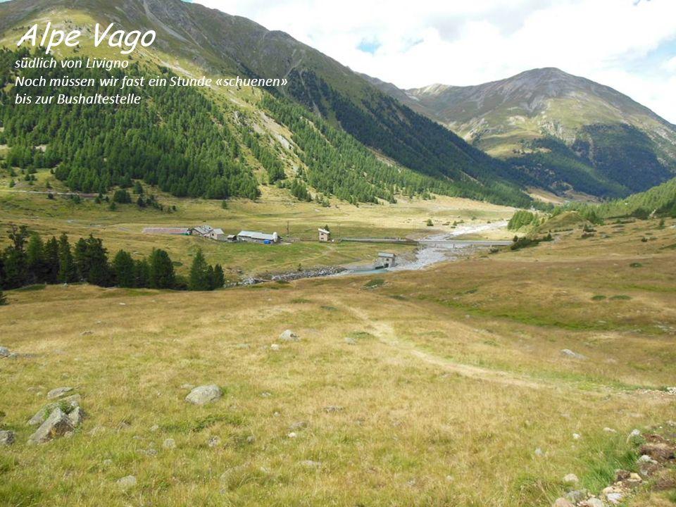 Alpe Vago südlich von Livigno Noch müssen wir fast ein Stunde «schuenen» bis zur Bushaltestelle