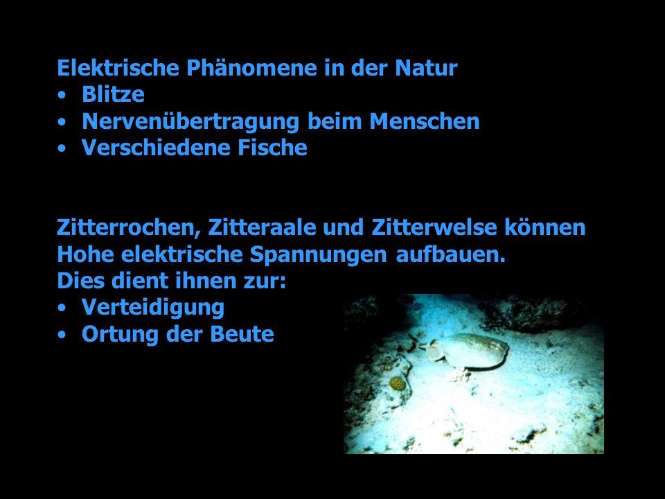 Elektrische Phänomene in der Natur Blitze Nervenübertragung beim Menschen Verschiedene Fische Zitterrochen, Zitteraale und Zitterwelse können Hohe ele