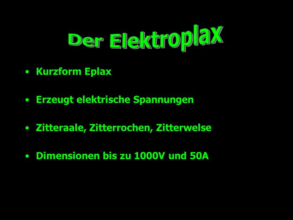 Kurzform Eplax Erzeugt elektrische Spannungen Zitteraale, Zitterrochen, Zitterwelse Dimensionen bis zu 1000V und 50A