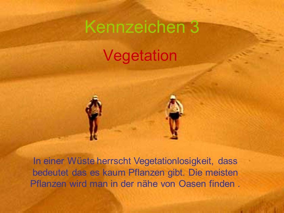 Kennzeichen 3 Vegetation In einer Wüste herrscht Vegetationlosigkeit, dass bedeutet das es kaum Pflanzen gibt. Die meisten Pflanzen wird man in der nä