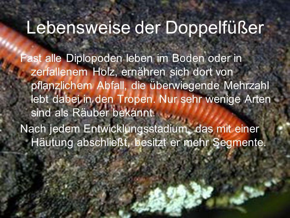 Lebensweise der Doppelfüßer Fast alle Diplopoden leben im Boden oder in zerfallenem Holz, ernähren sich dort von pflanzlichem Abfall, die überwiegende Mehrzahl lebt dabei in den Tropen.