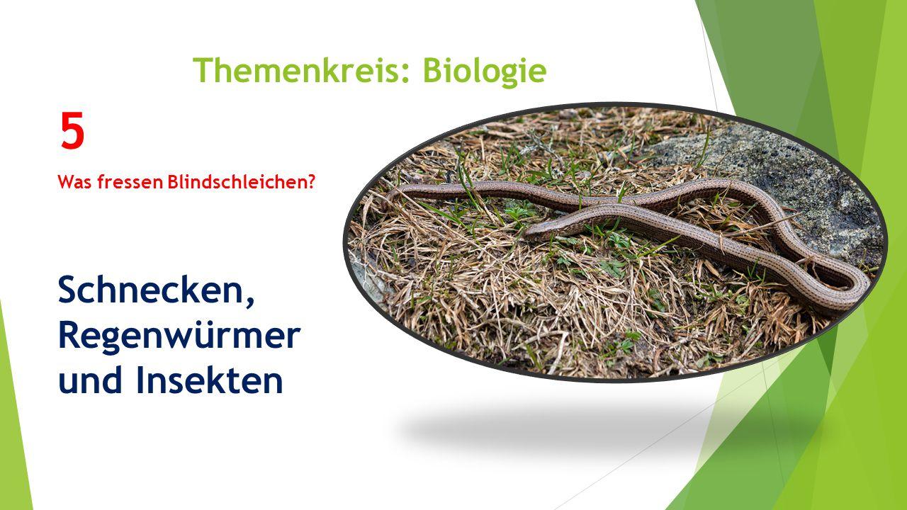 Themenkreis: Biologie 5 Was fressen Blindschleichen? Schnecken, Regenwürmer und Insekten
