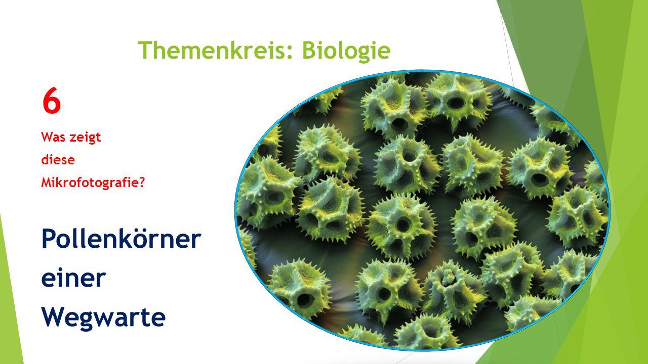Themenkreis: Biologie 6 Was zeigt diese Mikrofotografie? Pollenkörner einer Wegwarte