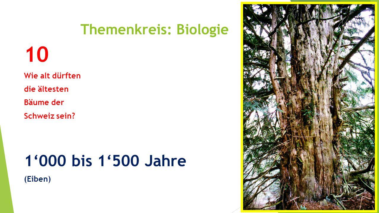Themenkreis: Biologie 10 Wie alt dürften die ältesten Bäume der Schweiz sein? 1'000 bis 1'500 Jahre (Eiben)