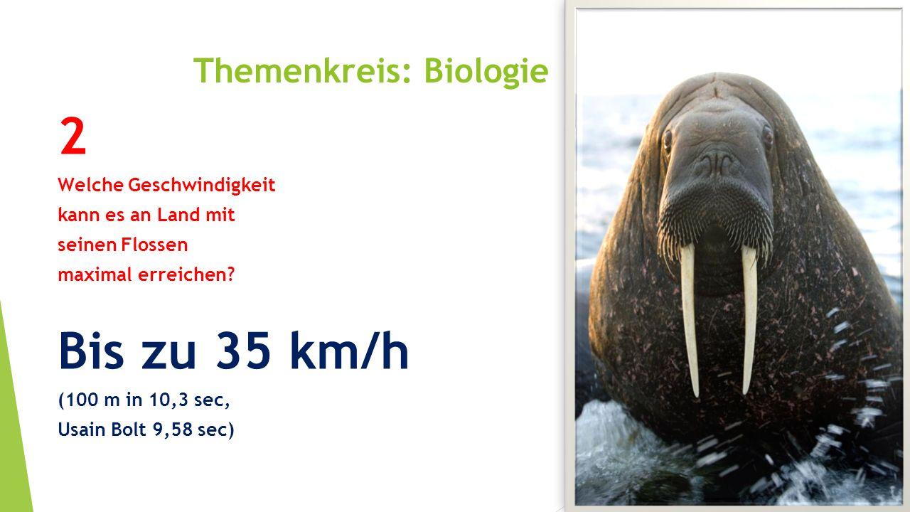 Themenkreis: Biologie 2 Welche Geschwindigkeit kann es an Land mit seinen Flossen maximal erreichen? Bis zu 35 km/h (100 m in 10,3 sec, Usain Bolt 9,5