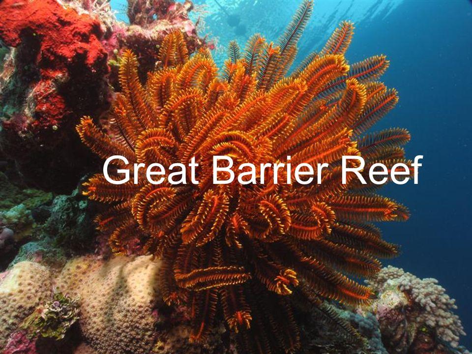 Allgemein größte Korallenriff der Erde Alter 600.000- 18 Millionen sieben Weltwundern der Natur 1981 Weltnaturerbe