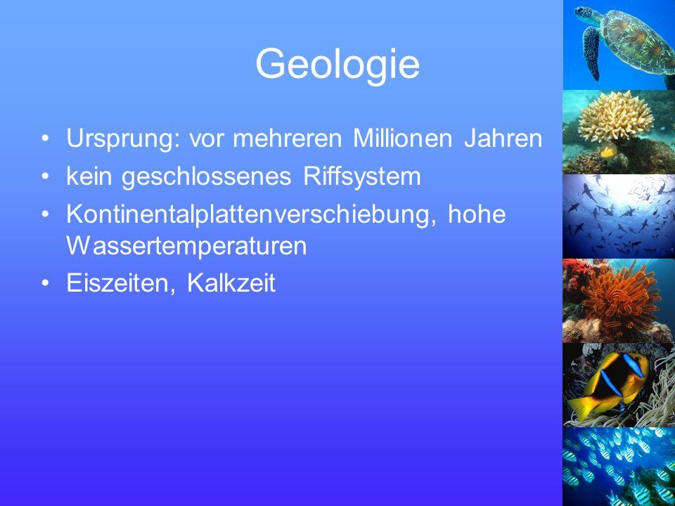 Geologie Ursprung: vor mehreren Millionen Jahren kein geschlossenes Riffsystem Kontinentalplattenverschiebung, hohe Wassertemperaturen Eiszeiten, Kalkzeit