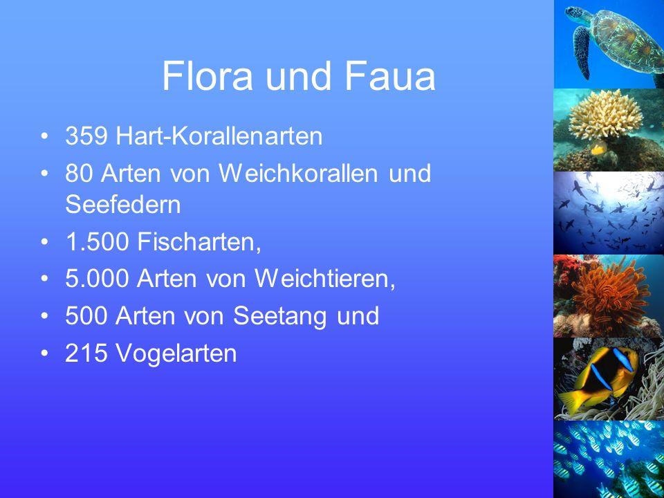 Flora und Faua 359 Hart-Korallenarten 80 Arten von Weichkorallen und Seefedern 1.500 Fischarten, 5.000 Arten von Weichtieren, 500 Arten von Seetang und 215 Vogelarten