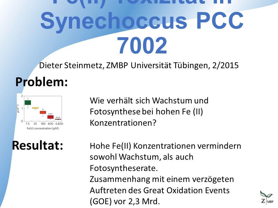 Fe(II) Toxizität in Synechoccus PCC 7002 Dieter Steinmetz, ZMBP Universität Tübingen, 2/2015 Problem: Resultat: Wie verhält sich Wachstum und Fotosynthese bei hohen Fe (II) Konzentrationen.