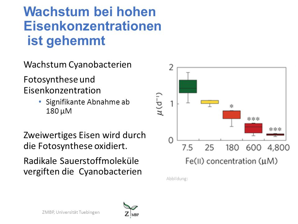 Wachstum bei hohen Eisenkonzentrationen ist gehemmt Wachstum Cyanobacterien Fotosynthese und Eisenkonzentration Signifikante Abnahme ab 180 µM ZMBP, Universität Tuebingen Zweiwertiges Eisen wird durch die Fotosynthese oxidiert.
