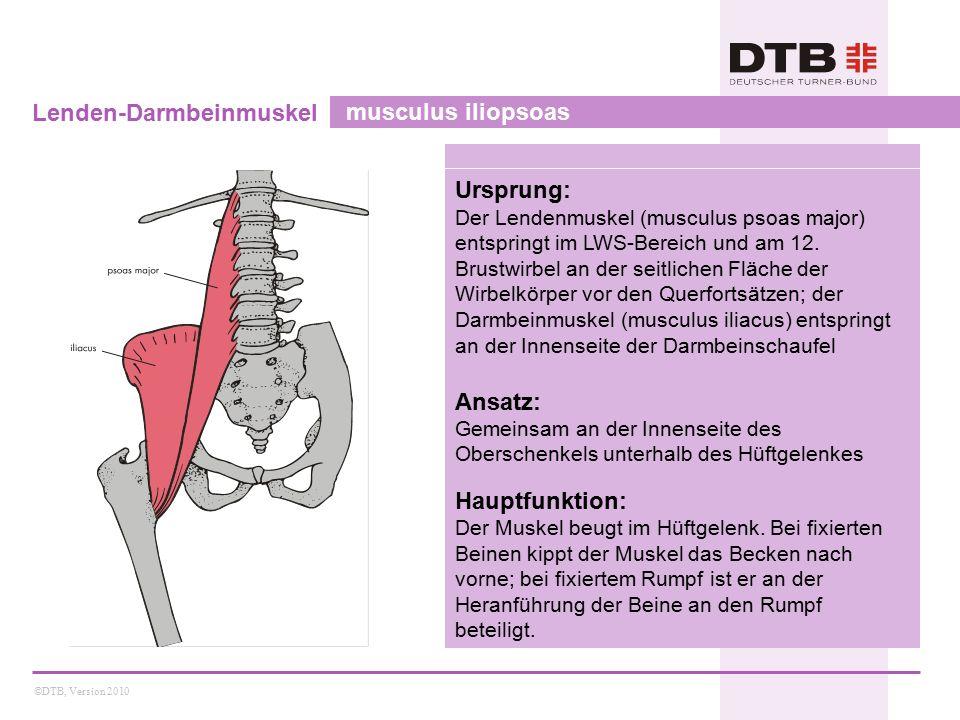 ©DTB, Version 2010 Zweiköpfiger Schenkelmuskel musculus biceps femoris Ursprung: Der lange Kopf entspringt vom Sitzbeinhöcker, der kurze Kopf von einer knöchernen Leiste in der Mitte der Rückseite des Oberschenkels Ansatz: Beide Köpfe vereinigen sich zu einer gemeinsamen Sehne, die am Wadenbeinköpfchen ansetzt Hauptfunktion: Beide Köpfe sind an der Kniebeugung beteiligt, der lange Kopf zusätzlich an der Hüftstreckung.