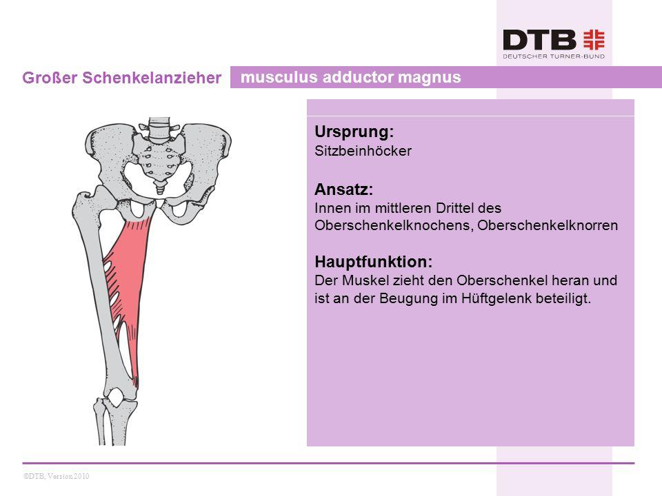 ©DTB, Version 2010 Großer Schenkelanzieher musculus adductor magnus Ursprung: Sitzbeinhöcker Ansatz: Innen im mittleren Drittel des Oberschenkelknoche