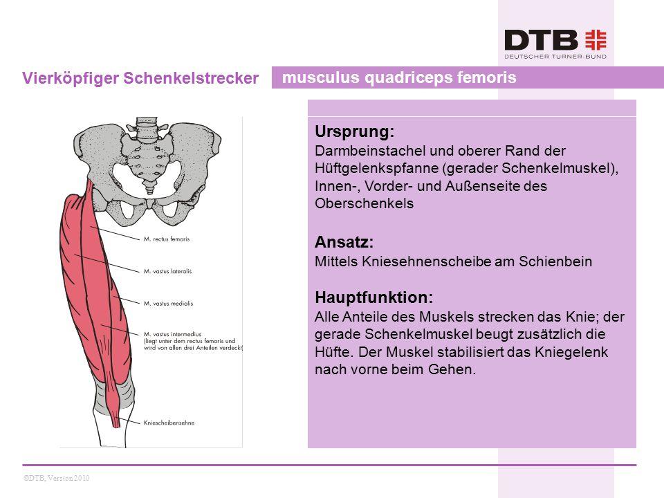 ©DTB, Version 2010 Vierköpfiger Schenkelstrecker musculus quadriceps femoris Ursprung: Darmbeinstachel und oberer Rand der Hüftgelenkspfanne (gerader Schenkelmuskel), Innen-, Vorder- und Außenseite des Oberschenkels Ansatz: Mittels Kniesehnenscheibe am Schienbein Hauptfunktion: Alle Anteile des Muskels strecken das Knie; der gerade Schenkelmuskel beugt zusätzlich die Hüfte.