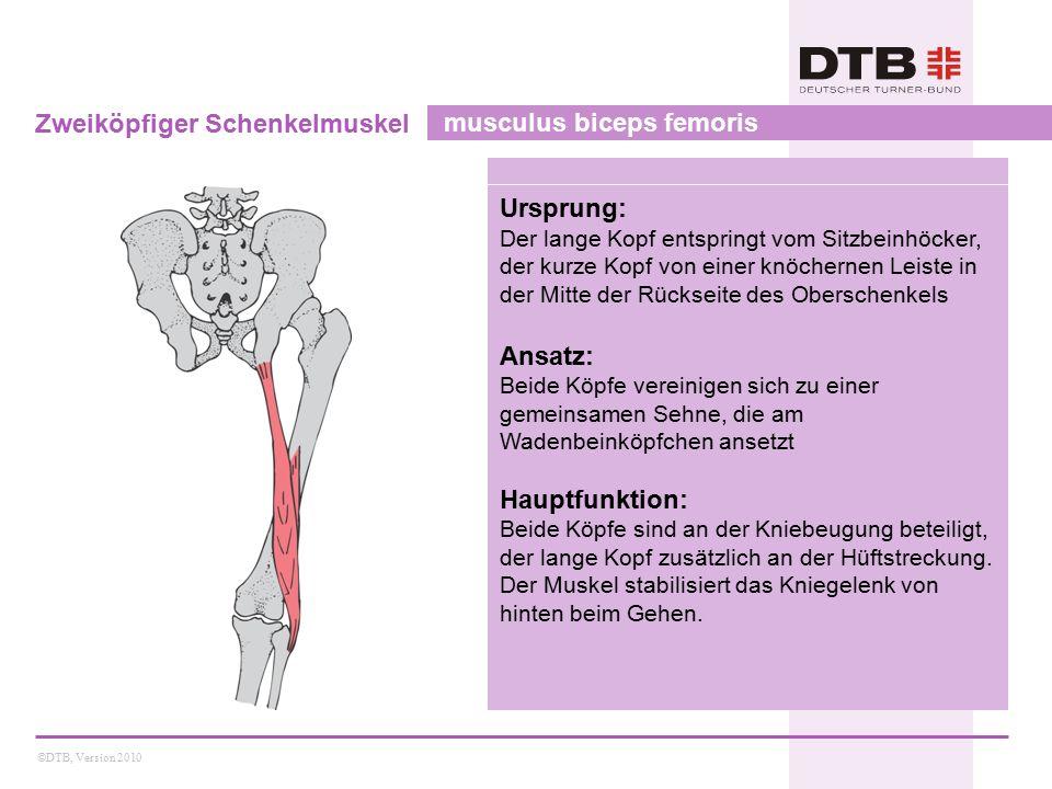 ©DTB, Version 2010 Zweiköpfiger Schenkelmuskel musculus biceps femoris Ursprung: Der lange Kopf entspringt vom Sitzbeinhöcker, der kurze Kopf von eine