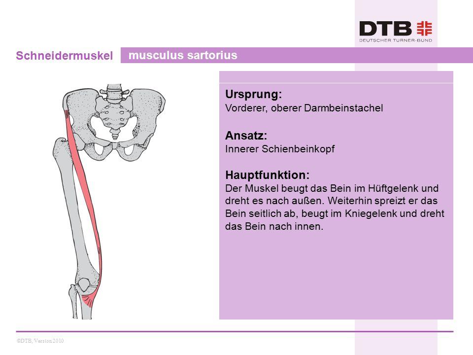 ©DTB, Version 2010 Schneidermuskel musculus sartorius Ursprung: Vorderer, oberer Darmbeinstachel Ansatz: Innerer Schienbeinkopf Hauptfunktion: Der Muskel beugt das Bein im Hüftgelenk und dreht es nach außen.