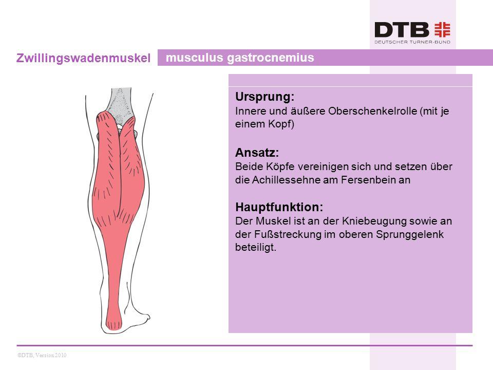 ©DTB, Version 2010 Zwillingswadenmuskel musculus gastrocnemius Ursprung: Innere und äußere Oberschenkelrolle (mit je einem Kopf) Ansatz: Beide Köpfe vereinigen sich und setzen über die Achillessehne am Fersenbein an Hauptfunktion: Der Muskel ist an der Kniebeugung sowie an der Fußstreckung im oberen Sprunggelenk beteiligt.