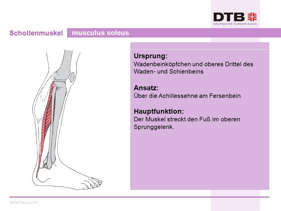 ©DTB, Version 2010 Schollenmuskel musculus soleus Ursprung: Wadenbeinköpfchen und oberes Drittel des Waden- und Schienbeins Ansatz: Über die Achilless