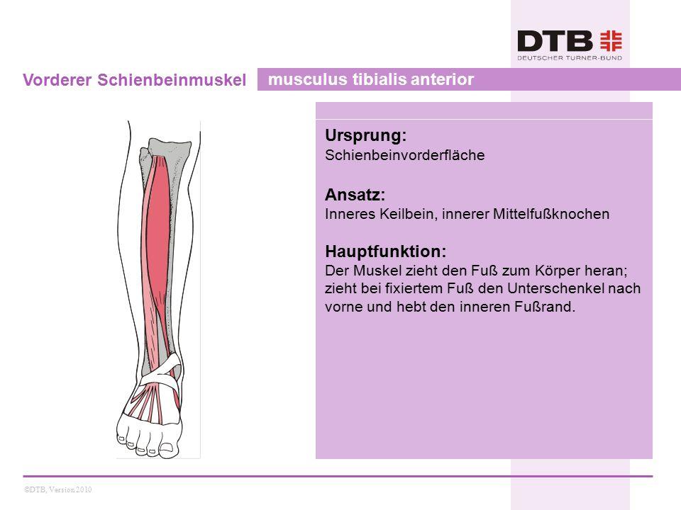 ©DTB, Version 2010 Vorderer Schienbeinmuskel musculus tibialis anterior Ursprung: Schienbeinvorderfläche Ansatz: Inneres Keilbein, innerer Mittelfußkn