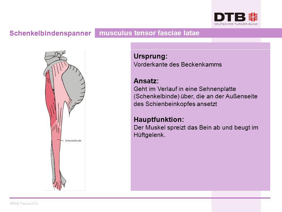 ©DTB, Version 2010 Schenkelbindenspanner musculus tensor fasciae latae Ursprung: Vorderkante des Beckenkamms Ansatz: Geht im Verlauf in eine Sehnenpla