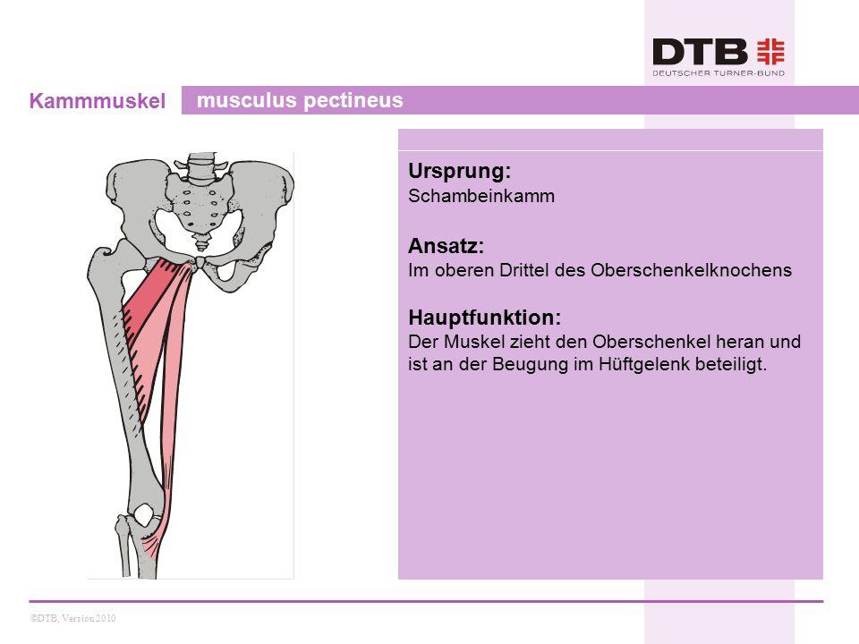 ©DTB, Version 2010 Kammmuskel musculus pectineus Ursprung: Schambeinkamm Ansatz: Im oberen Drittel des Oberschenkelknochens Hauptfunktion: Der Muskel zieht den Oberschenkel heran und ist an der Beugung im Hüftgelenk beteiligt.
