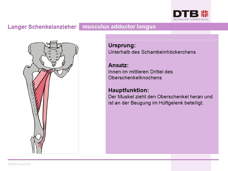 ©DTB, Version 2010 Kurzer Schenkelanzieher musculus adductor brevis Ursprung: Unterrand des Schambeins Ansatz: Innen im oberen Drittel des Oberschenkelknochens Hauptfunktion: Der Muskel zieht den Oberschenkel heran und ist an der Beugung im Hüftgelenk beteiligt.