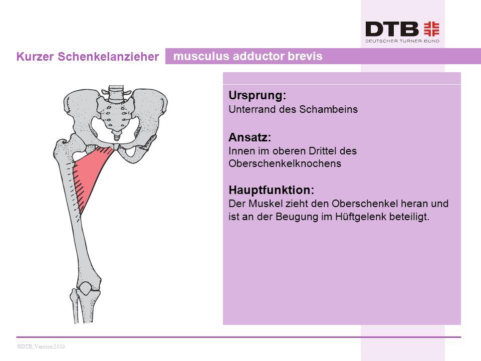 ©DTB, Version 2010 Großer Schenkelanzieher musculus adductor magnus Ursprung: Sitzbeinhöcker Ansatz: Innen im mittleren Drittel des Oberschenkelknochens, Oberschenkelknorren Hauptfunktion: Der Muskel zieht den Oberschenkel heran und ist an der Beugung im Hüftgelenk beteiligt.