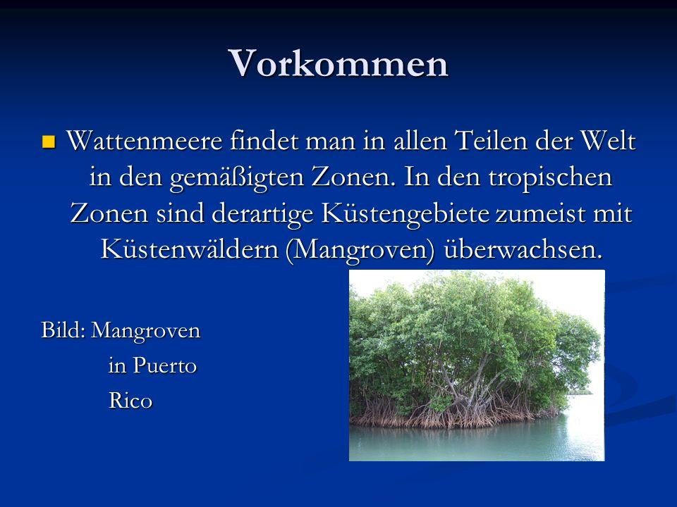 Vorkommen Wattenmeere findet man in allen Teilen der Welt in den gemäßigten Zonen. In den tropischen Zonen sind derartige Küstengebiete zumeist mit Kü