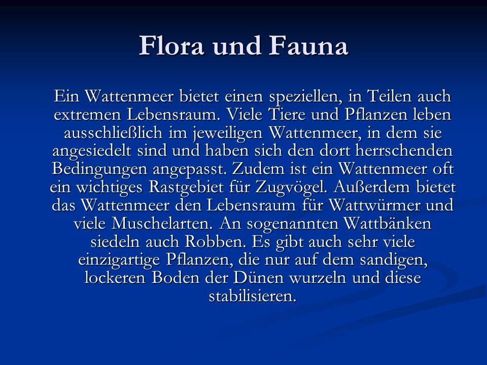 Flora und Fauna Ein Wattenmeer bietet einen speziellen, in Teilen auch extremen Lebensraum. Viele Tiere und Pflanzen leben ausschließlich im jeweilige